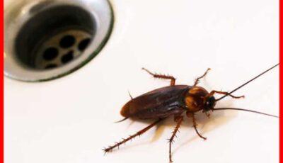 10 تجارب لربات البيوت للتخلص من الصراصير – انسان